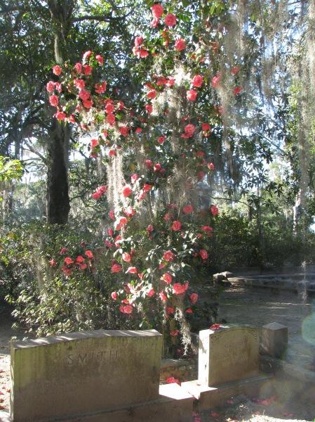 Blooms at Bonaventure