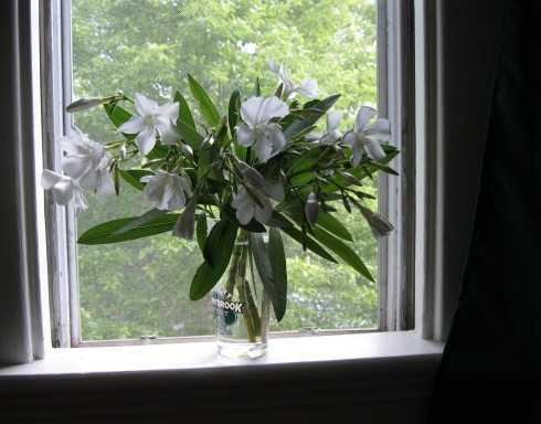 white tree flowers in window